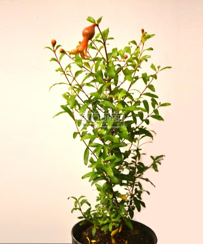 greenroom image